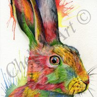 Alfie the Hare