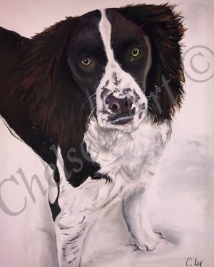 Mollie the English Springer Spaniel